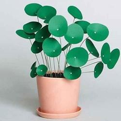 送爸爸一盆绿植!卡纸手工制作父亲节盆栽礼物