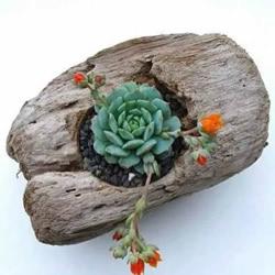 DIY枯木多肉植物盆栽 用枯木做多肉花盆方法