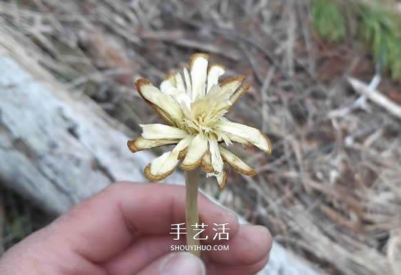 簡單手工樹枝雕刻做花的方法圖解教程