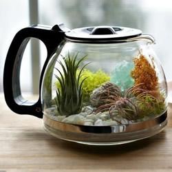 旧咖啡壶改造 DIY制作空气植物盆景的方法