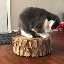 自制猫咪磨爪器 纸板箱再利用不花一分钱!