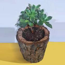 自制木桩花盆的简单方法图解教程