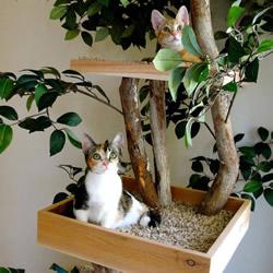 为猫提供逼真户外体验!树木做成的室内树屋