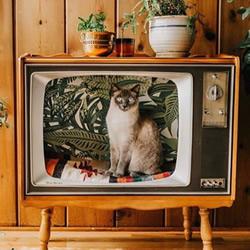 复古旧电视改造DIY,化身猫咪的美丽小窝